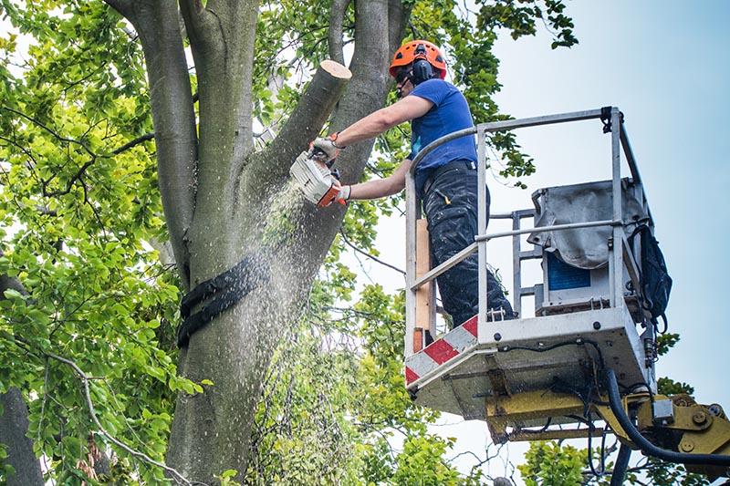 Baumpflegearbeiten mit Arbeitsbühne