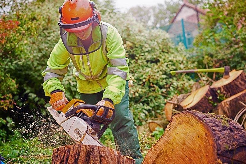 Bäume fachgerecht fällen